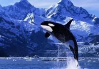 DeFi鲸鱼的自我修养:从百万到千万之路