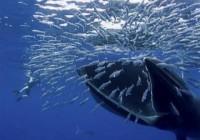 比特币「鲸鱼」内卷,散户或陷不利