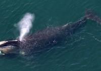 巨鲸狂欢,4 月近 7 成以太坊被 1311 个钱包占有